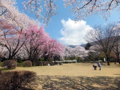 石川県林業試験場樹木公園