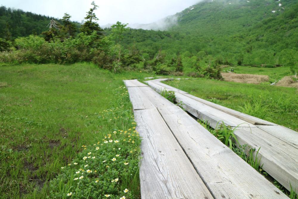 ワタスゲ湿原、栂池自然園